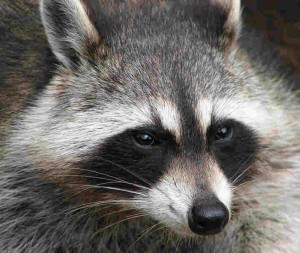 how to stop raccoon eyes